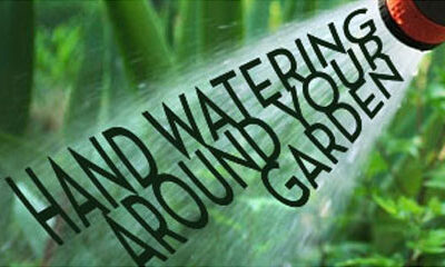 Hand Watering Around Your Garden